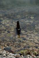 Floating Beer Bottle
