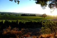 Sunset at Hawkes Vineyard 01