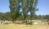 Horse Show at Columbia County Fair, St Helens, Ore