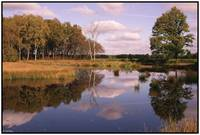 Autumn on the Veluwe