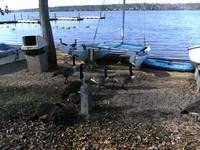 Ducks and Beached Boats at Brandermill Lake