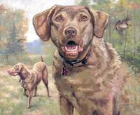 Chesapeake Bay Retriever  Oil Painting
