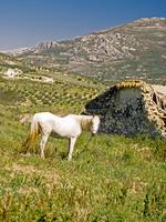 Spanish Landscape with Horse