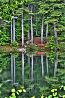Pond Reflection