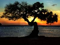 Aruba Twisted Tree at Sunset