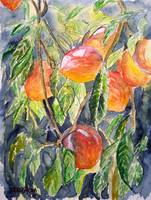 peaches fine art still life painting
