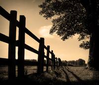 Fence and Tree