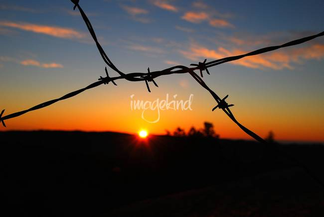 Sunset Wire