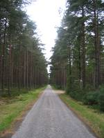 Scotland - ' Road through the woods at Ardersier'