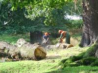 Loggers At Work  (13853-RD)