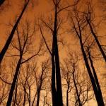 Treetops Prints & Posters