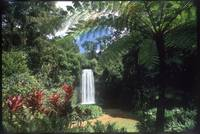 Millaa Millaa Falls, Northern Queensland by WorldWide Archive