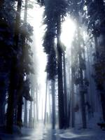 yos_sequoia011cs3