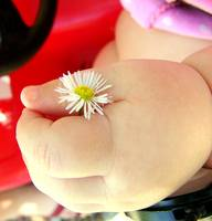 tiny flower in a tiny hand