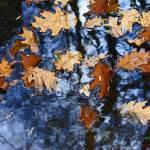 Leaves Prints & Posters