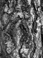 Tree trunk BW