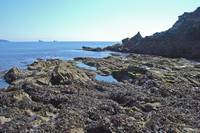 Rock Pools  (15048-RDA)
