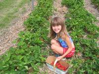 strawberry picking 003.jpg