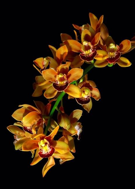 Открытки красивые букеты цветов с пожеланиями стойкий воздействию
