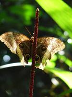 Butterfly in the Costa Rican Rain Forest