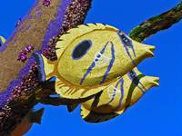 Flower Fish II