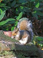 Squirrel feeding