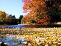 Cranbrook_Autumn