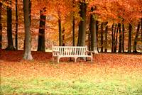 Garden Bench in Autumn Scenery