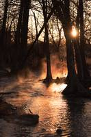 Sunrise on the River: Fog and Light 1