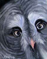 IK-Great Gray Owl