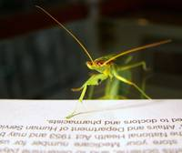 Praymantis Reader