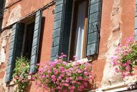 Venetian Windows