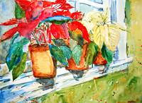 Poinsettias on a windowsill
