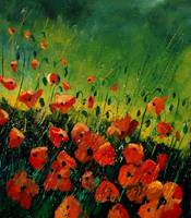 Red poppies 212123