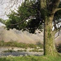Holly Tree, Wasdale