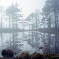 Ennerdale, morning mists 3
