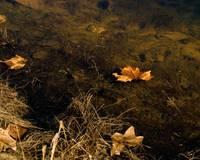 Leaves Afloat