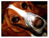 Hound Dog Eyes