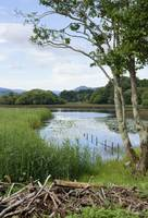 Killarney lakeside scene