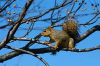 Squirrel 5963