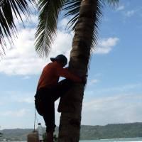 Coconut Farmers in Pangandaran beach_Photo by Argu Art Prints & Posters by Argus Firmansah