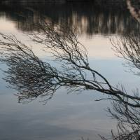 Winter tree scene img 3260 by George Riethof