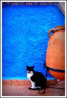The cat in Rabat