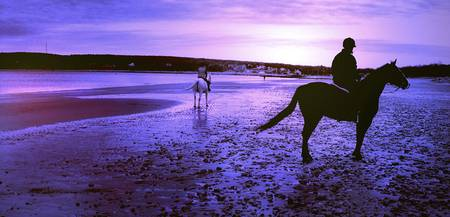 a white horse rides off into the indigo sunset