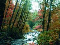 Rock creek in fall
