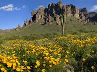 Superstition Spring by Michael Stephen Wills