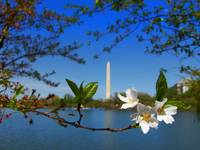 Monumental Blossoms II by Wendy Ritch