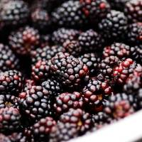 """Blackberries"" by emilymccallphotography"