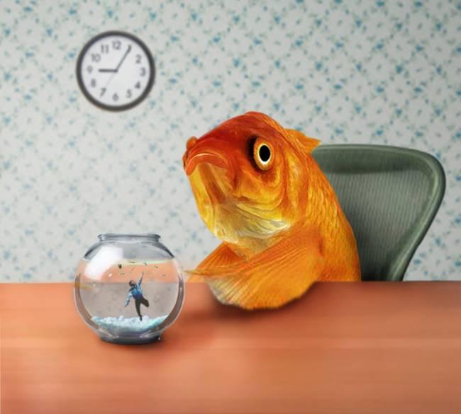Стиле тиффани, смешные картинки про аквариум