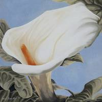 Calla Lily over blue
